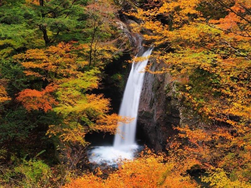 四季折々変わりゆく滝のある風景