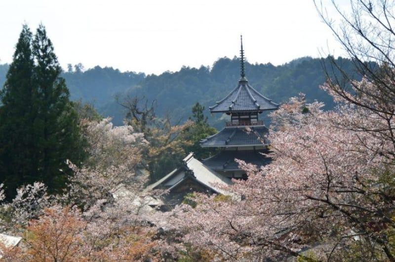 100439:古都・奈良の絶景は金峯堂山にあった…