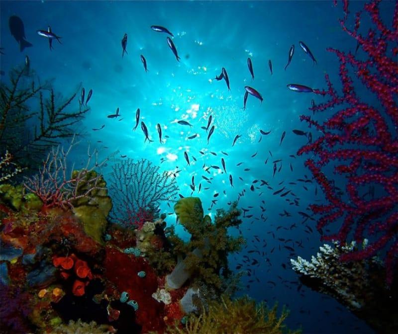 東南アジア最大の美しいサンゴ礁!トゥバタハ岩礁海中公園