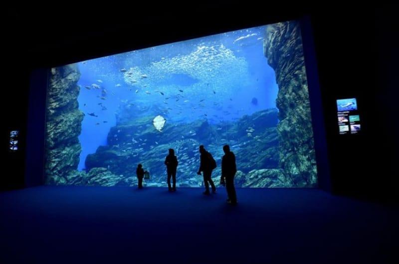 新しくオープンした「うみの杜水族館」