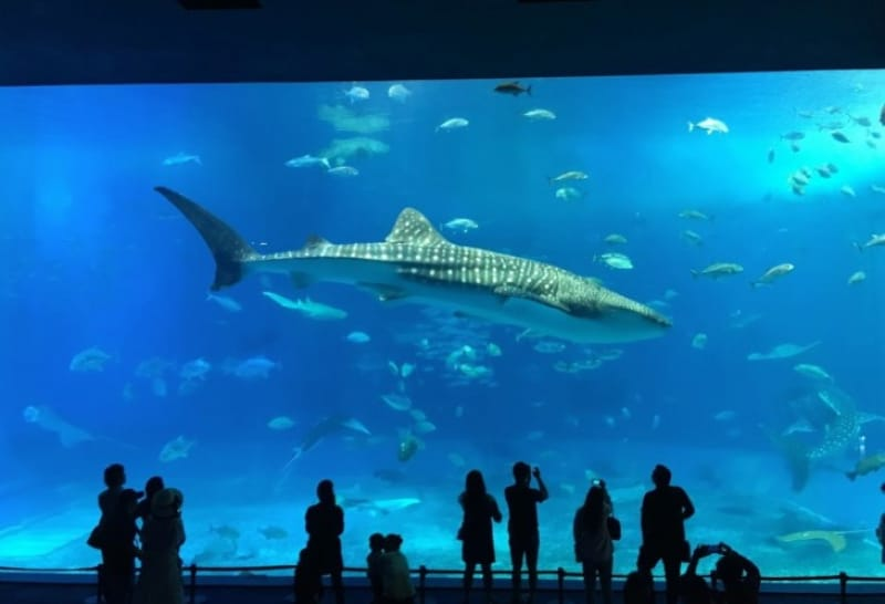 103309:1-1.沖縄美ら海水族館施設概要