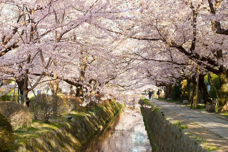 春 関雪桜の名所