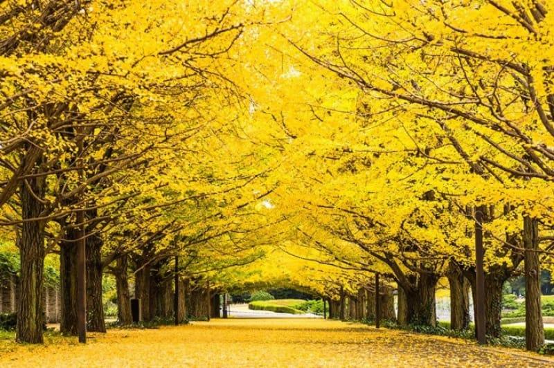 東京にいることを忘れちゃいそうな自然あふれる公園
