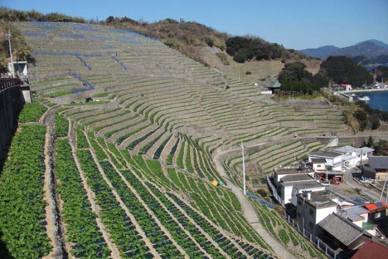 第7位 遊子水荷浦の段畑/愛媛県