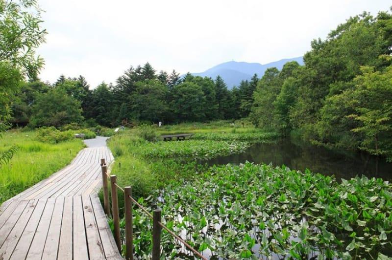 さまざまな植物に出会える・箱根湿生花園