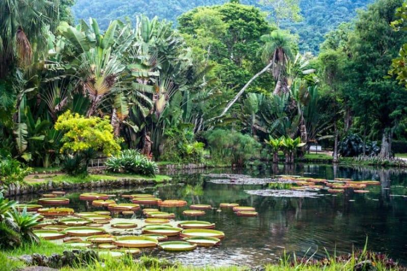 植物園で熱帯植物を堪能