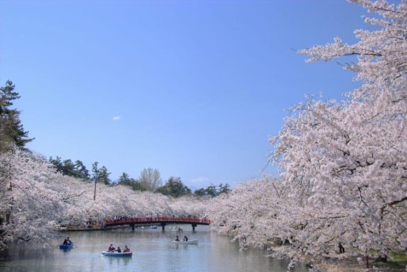 弘前城の桜祭りってなに?