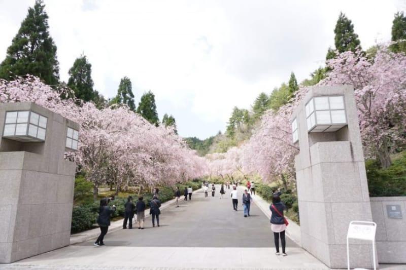 97226:待っていたのは、絶景の桜並木