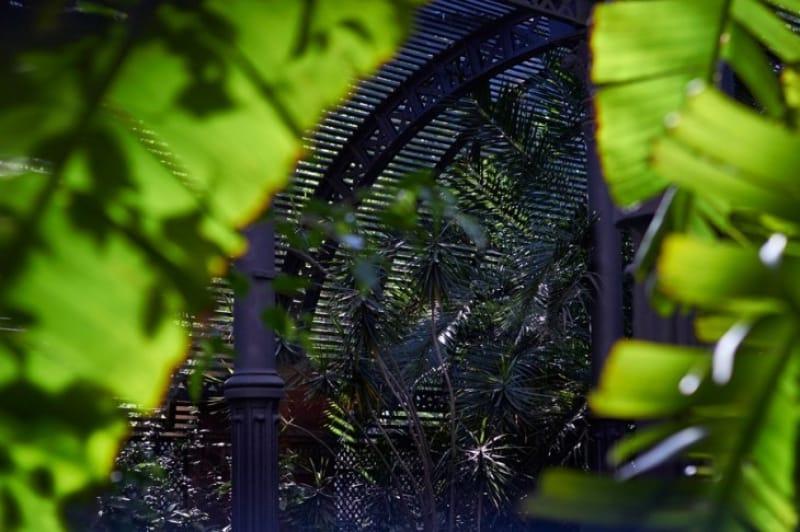 キュー・ガーデンのおすすめスポット①パームハウス