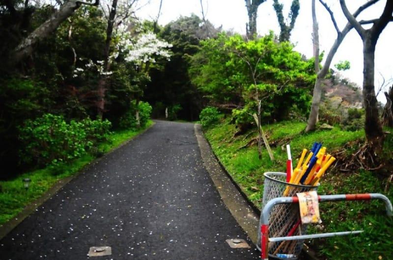 101682:森林浴ができる山道を抜けると、待ちわびる1000本桜