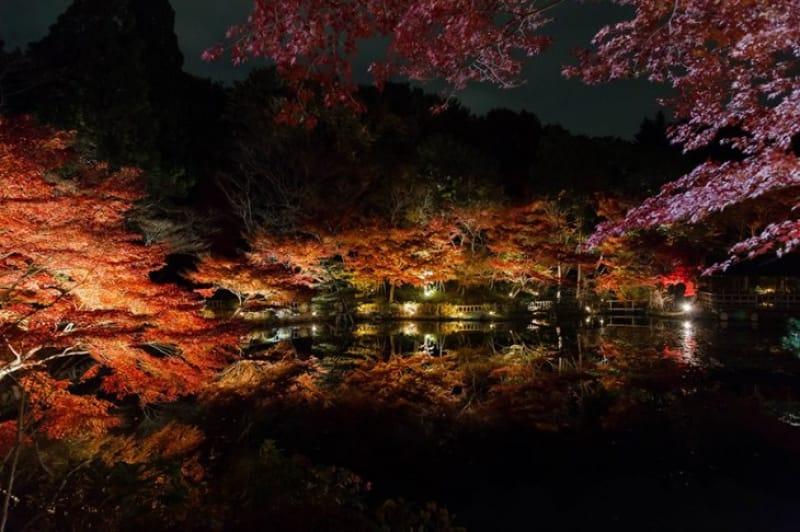 さまざまなモミジが楽しめる・名古屋市東山動植物園