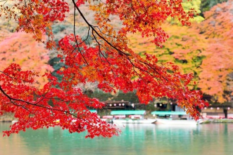 様々な角度から紅葉を楽しめる嵐山