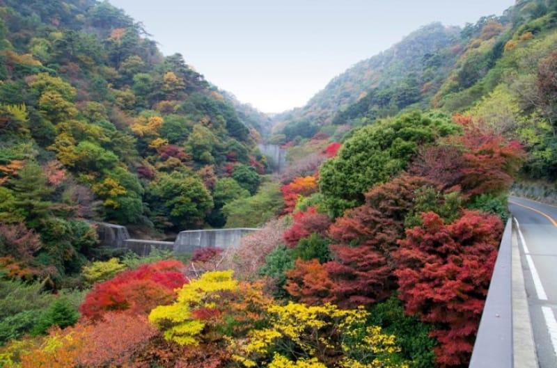 1500種類の自然とともに紅葉を味わう・六甲高山植物園