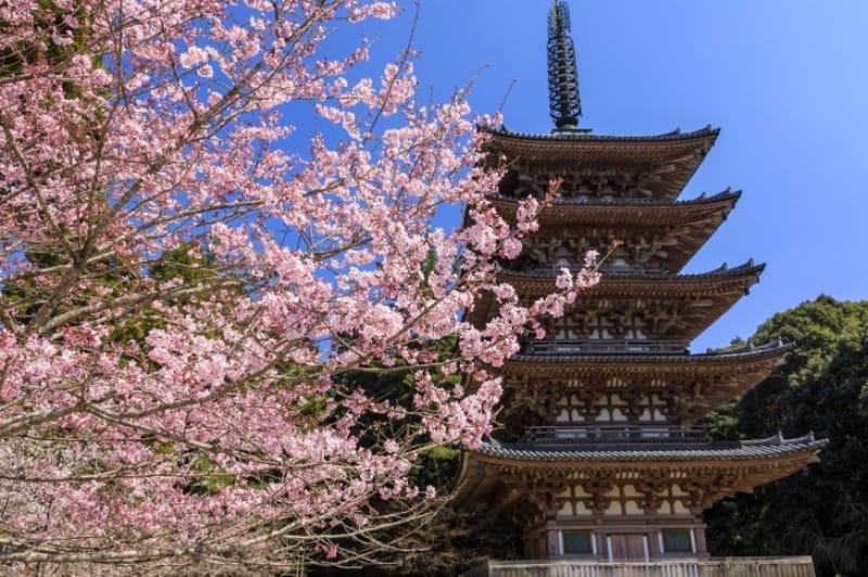 2.醍醐寺の見どころは?