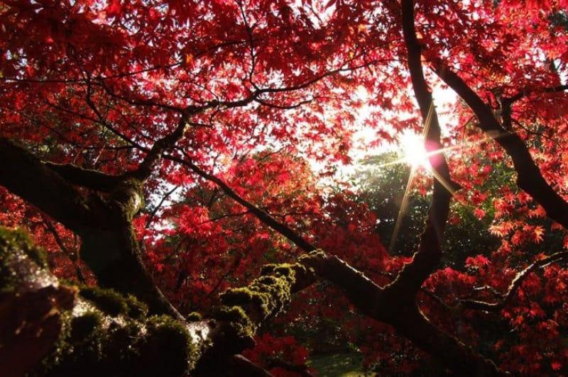 素晴らしい紅葉を見ることができるウェストンバート国立森林公園