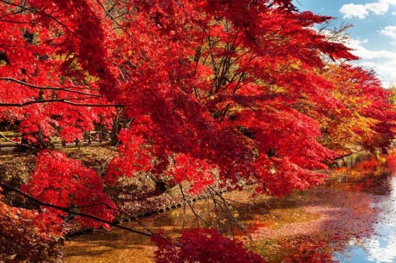 「秋」の紅葉の見どころといえば、弘前城