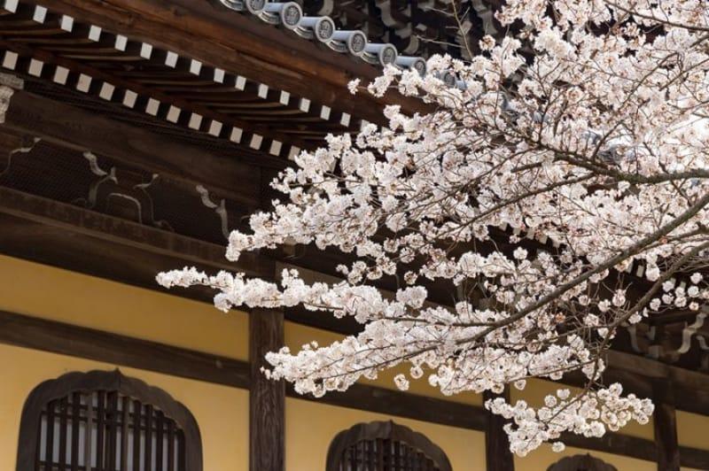 春は桜が咲き誇ります