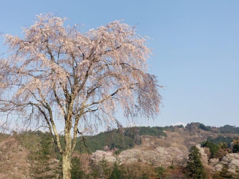 96366:世界遺産 吉野山で雄大な自然に触れよう!