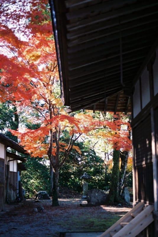 桜でも有名なスポット・吉野山(下千本)