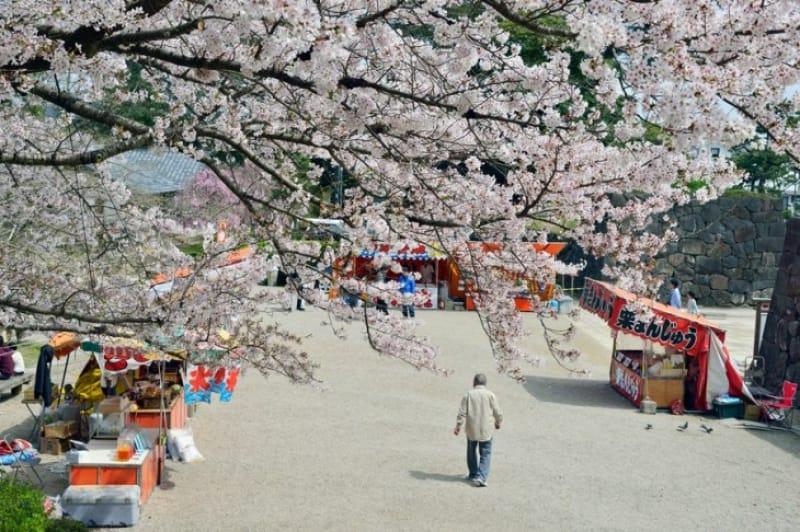 春には桜が咲き誇る「日本さくら名所100選」の一つ