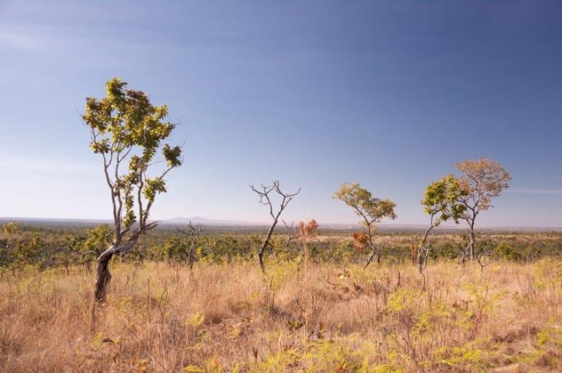 16)地球最古の平原「セラード保護地域」(自然遺産・2001年登録)