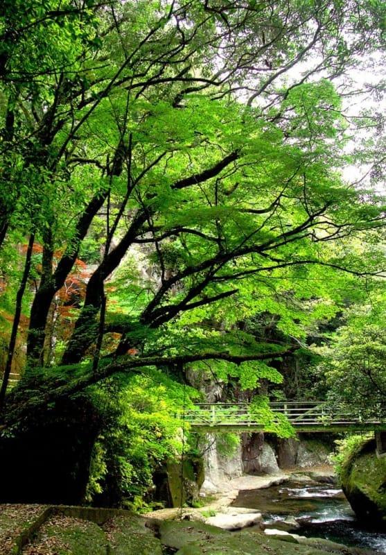 癒しのスポット 悠久の森