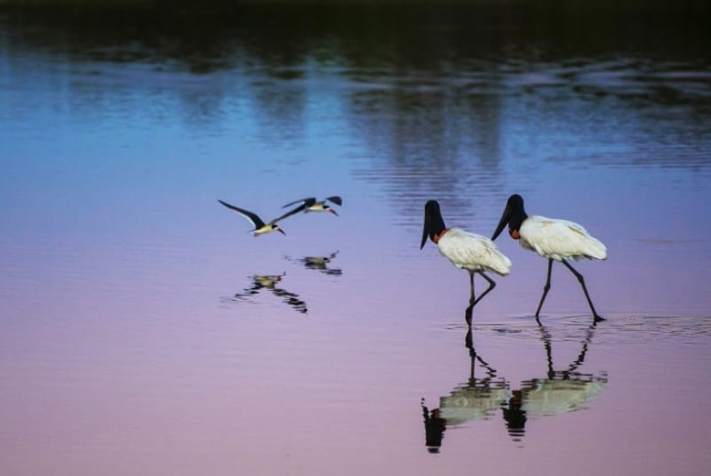 14)野鳥の王国「パンタナル自然保全地域」(自然遺産・2000年登録)