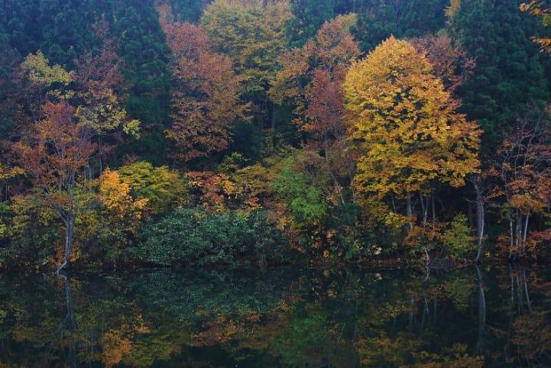 ブナ林が作り出す紅葉・道院高原
