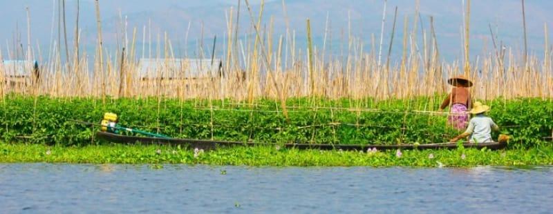 水上の畑「浮き庭」