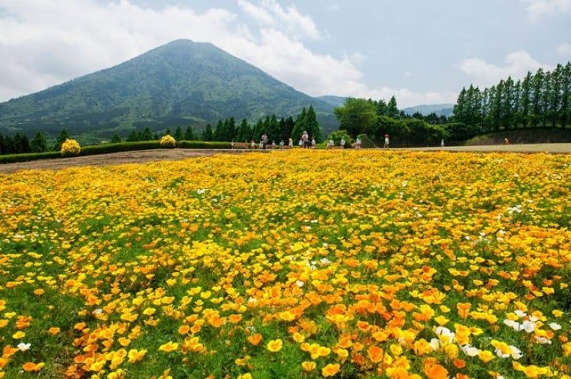 花の名所 生駒高原