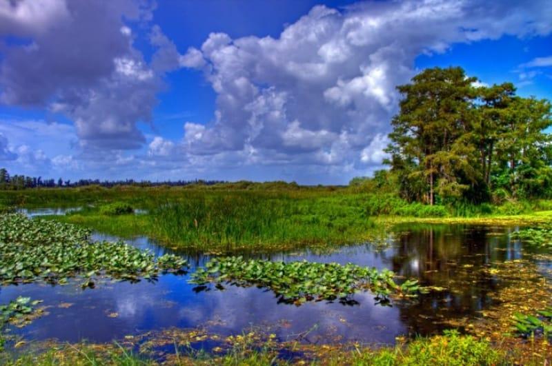 水鳥たちの楽園、エバーグレーズ