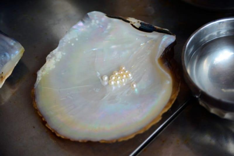 ミキモト真珠島で真珠について知りたい