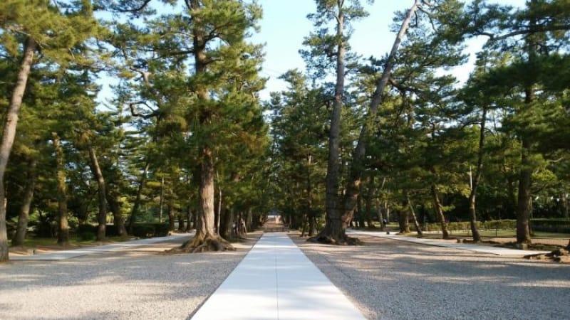 101976:出雲大社の松林は神話の宿る美しさ