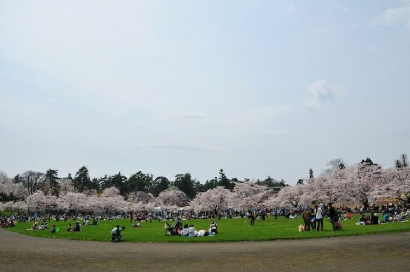 弘前公園でピクニックってどんな感じ?