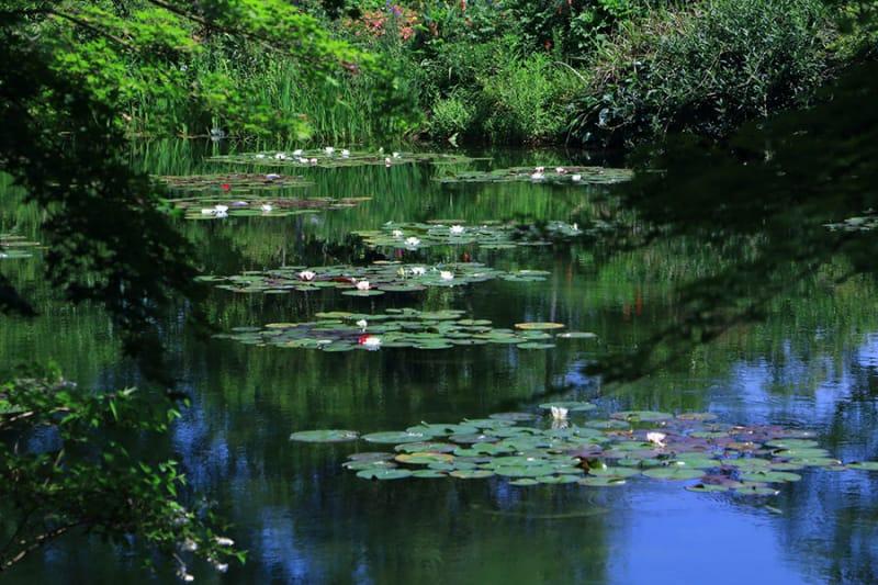 睡蓮の咲く モネの庭