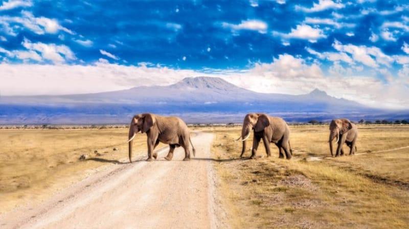 ビッグファイブその4:哺乳類最大の動物・ゾウ