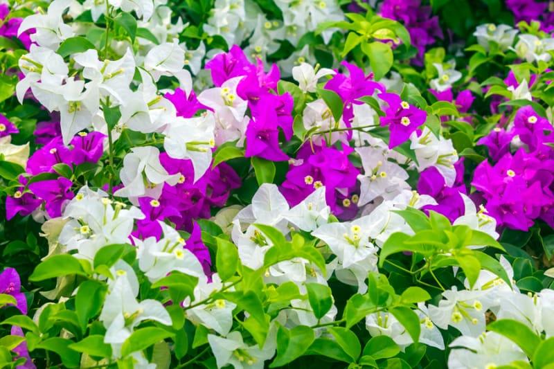 色とりどりの花に囲まれて・ブーゲンハウス嬉野