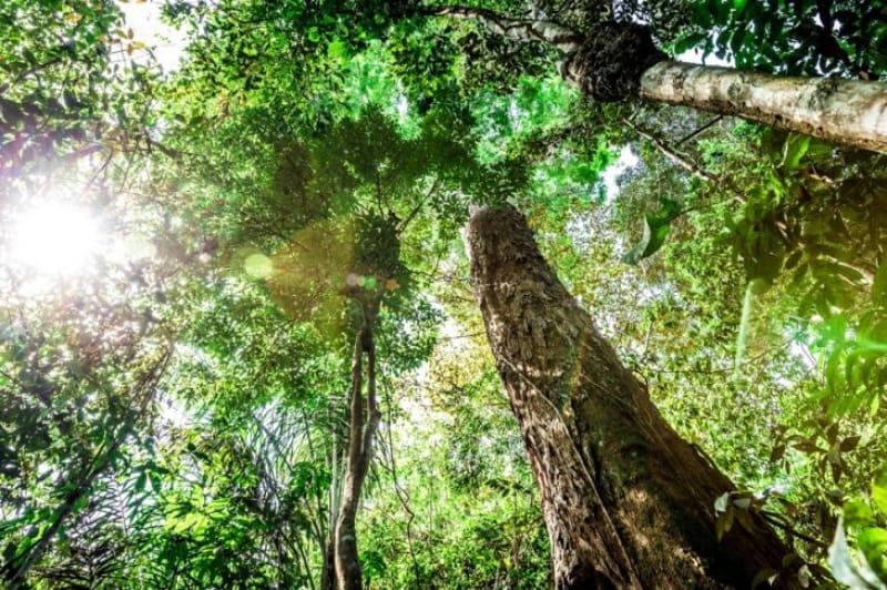 緑の木漏れ日はいつでも優しい