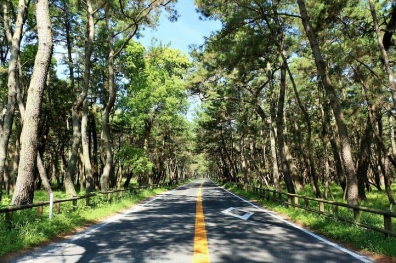 日本最長!美しき松原「虹の松原」