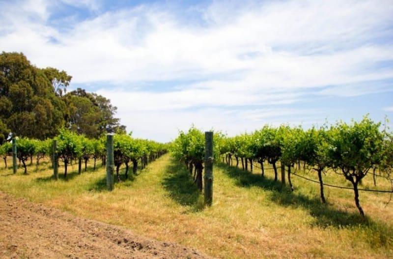 No.9 オーストラリアワインはここから スワンバレー