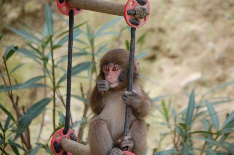 サルに出会えるおすすめシーズンは?