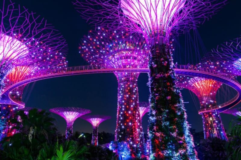 カラフルに照らす巨木達