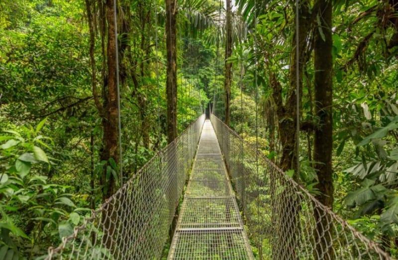モンテベルデ雲林保護区にあるつり橋