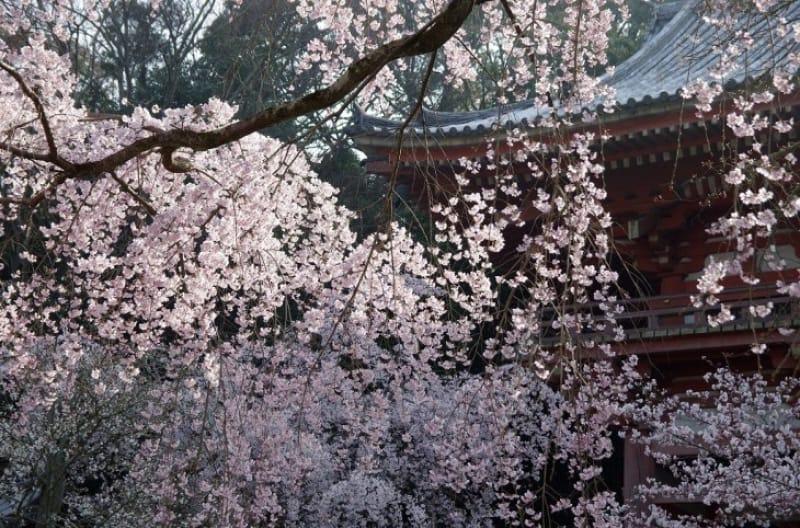 3.醍醐寺の四季