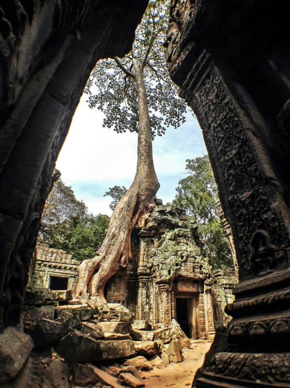 巨大な樹木の生命力を感じられる、タ・プローム