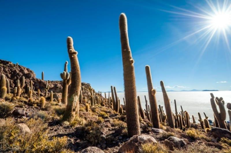 サボテンの残る儀式の島 インカ・ワシ