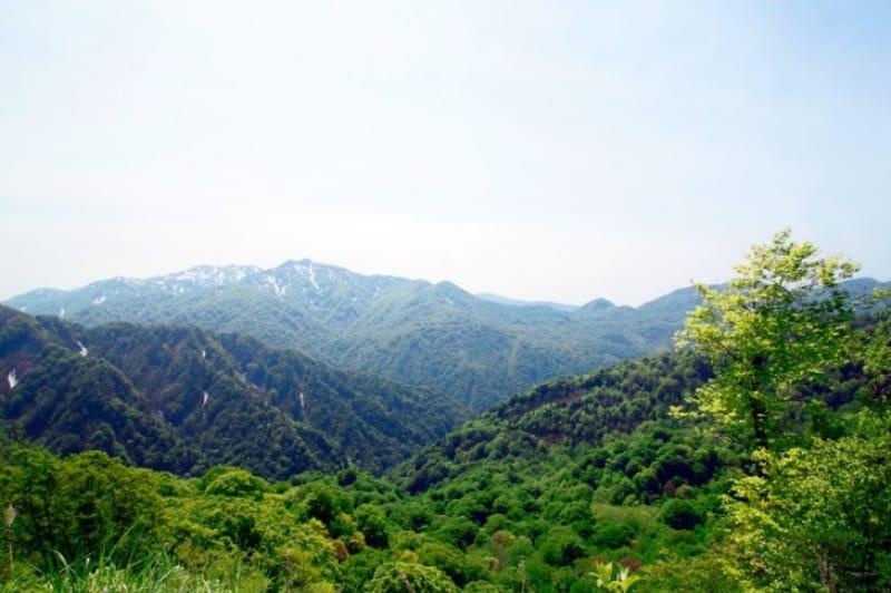 自然が残る世界遺産・白神山地